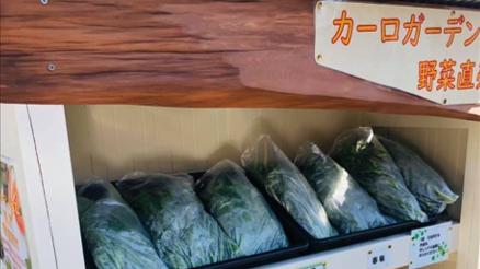 敷地内で育ってきた野菜が沢山あるので、地域の皆様に販売することにしました!